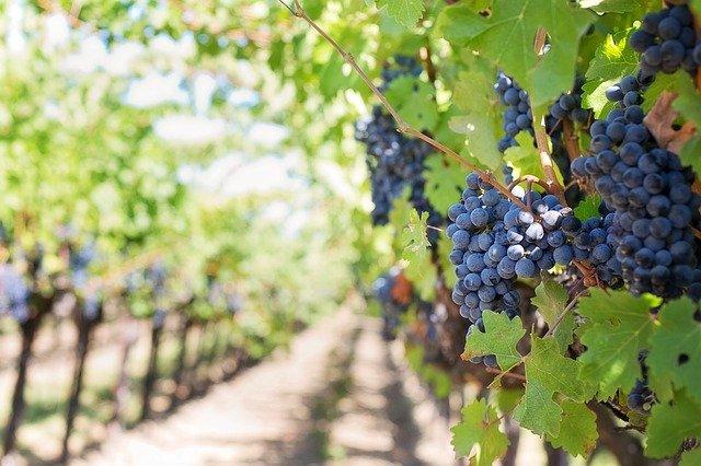 4 conseils à suivre pour partir en excursion dans le vin